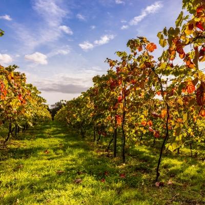 Enjoy a digital detox at Sussex's Bolney Wine Estate