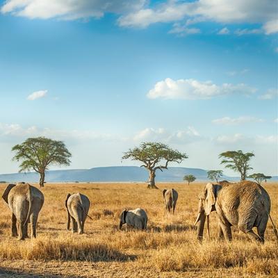 Aardvark Safari encourages honeymooners to postpone rather than cancel safari honeymoons