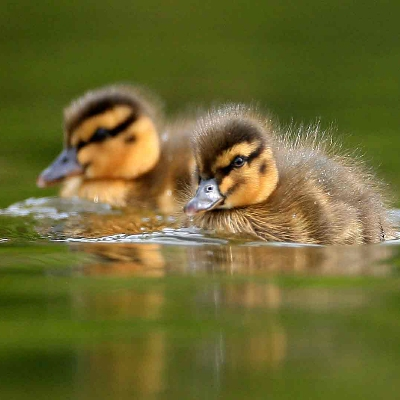 Visitors welcome back at Arundel Wetland Centre in West Sussex from tomorrow