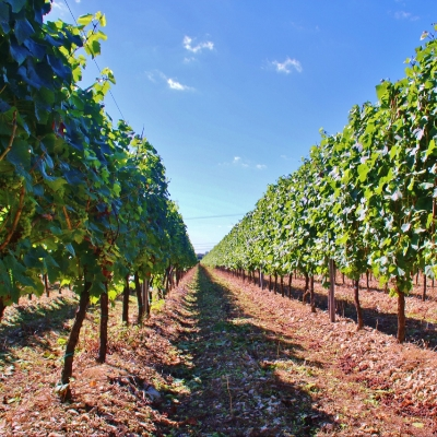 The perfect staycation this summer in the heart of a West Sussex vineyard