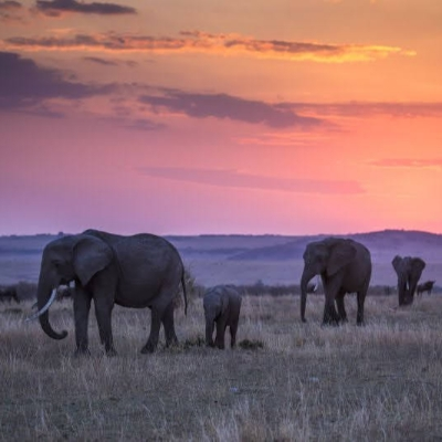 Introducing Great Plains, an iconic conservation organisation in Africa