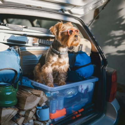 When was the last time your dog had a holiday?