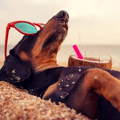 Brighton named among top dog-friendly staycation spots for 2021