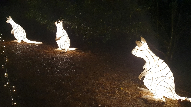 illuminated wallabies