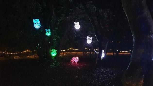 illuminated and colourful owls.
