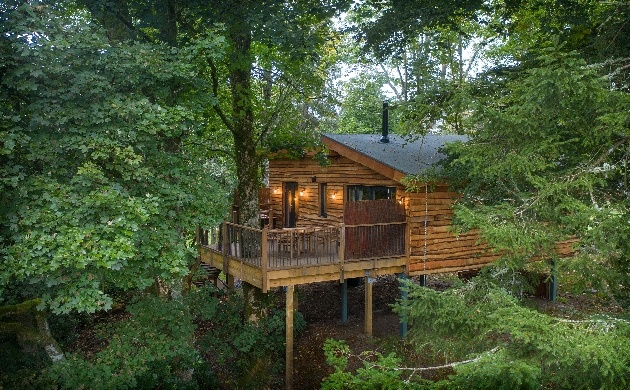 treehouse in trees