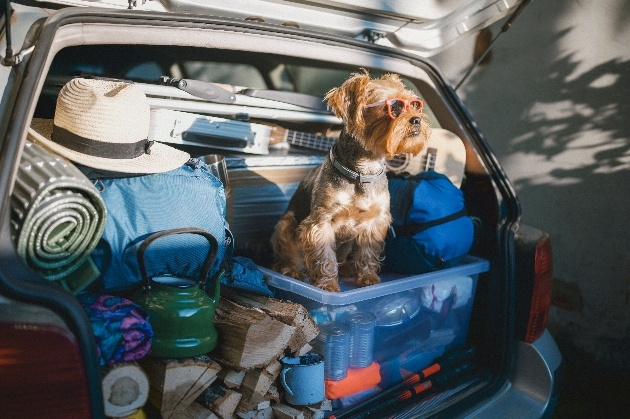 Dog sitting in the boot with all of the holiday packing ready to go
