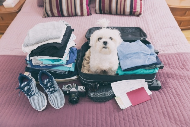 Little white dog sitting in a suitcase ready to go on his holidays